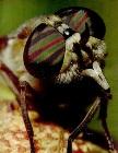 Канадец судится из-за дохлой мухи: она лишила его половой жизни и бизнеса